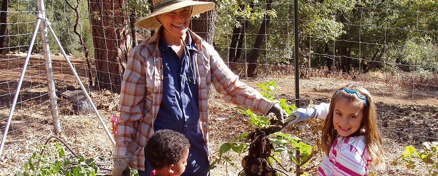 Dr. Jo's Vegetable Garden
