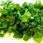 Cilantro, a bitter herb